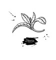 stevia drawing herbal sketch of sweetener vector image vector image