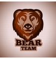 graphic bear face template for logo badge vector image