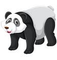 a cute panda character vector image