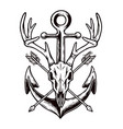 deer skull and old anchor vector image