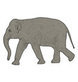 silhouette large african elephant on a white vector image vector image