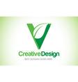 v green leaf letter design logo eco bio leaf vector image