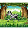 A zebra at the jungle vector image vector image