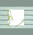 white card with snowdrops on wooden background vector image vector image