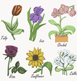 Set of colored flowers - tulip iris orchid rose vector image