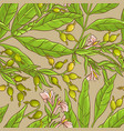 cardamom pattern vector image vector image
