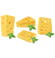 Cheese and basil vector image vector image