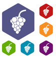 grape branch icons set vector image vector image