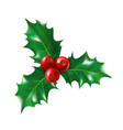 isolated holly berry with leaves ilex berries vector image