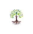 tree root logo vector image vector image