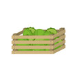wooden box farm green cabbage for home storage vector image