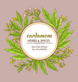 cardamom frame vector image vector image