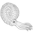nautilus adult coloring page vector image vector image