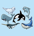 set of cheerful various of whales vector image