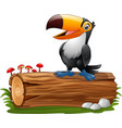 cartoon funny toucan standing on tree log vector image vector image