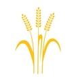 Ears of Wheat Barley or Rye vector image vector image