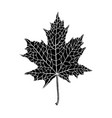 hand-drawn silhouette of a maple leaf vector image vector image