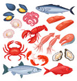 seafood in cartoon style vector image vector image