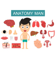 anatomy body man vector image