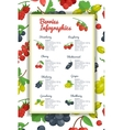 Berries Infographic Set vector image vector image