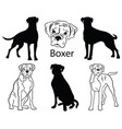 boxer set collection pedigree dogs black vector image vector image