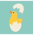 Chicken hatches from the egg vector image vector image