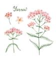Hand drawn watercolor botanical vector image