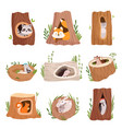 holes in tree home hollow for wild animals trunk vector image vector image