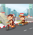 monkey riding bicycle in town vector image vector image