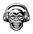 angry monkey head in headphones vector image vector image