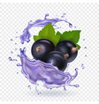 blackcurrant juice splash forest berries smoothie vector image vector image