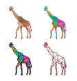 giraffe low poly design vector image