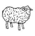 sheep icon hand drawn style vector image