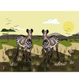 Two Zebras vector image
