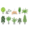 Big trees house plants collection vector image vector image
