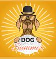dog days of summer logo icon design vector image