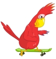 Funny Parrot Skateboarding vector image vector image