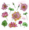 set lotus flower in different views bloomed vector image vector image