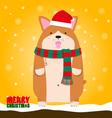 Merry Christmas cute big fat Welsh Corgi dog vector image