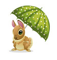 cute rabbit under a green umbrella isolated on vector image vector image