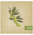 olive eco background vector image vector image