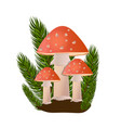 red amanita mushrooms in forest on white vector image