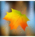 Autumn orange leaf on wet glass vector image