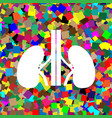 human anatomy kidneys sign white icon on vector image