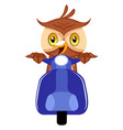owl riding scooter on white background vector image vector image