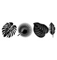 set various tropical black leaves design vector image vector image