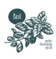 basil branch for design menu vector image vector image
