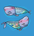 floral anatomy whales in cartoon style vector image vector image