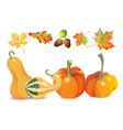 set of autumn objects pumpkins different types vector image vector image