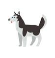 siberian husky dog character purebred dog vector image vector image